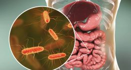 How a Healthy Gut Helps You Lose Weight and Keep It Off