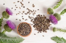 Milk Thistle For Liver: 5 Milk Thistle Benefits